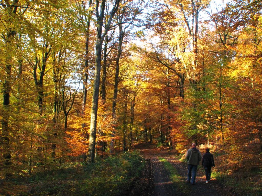 Herfstvakantie even er lekker tussenuit en genieten van de mooie herfstkleuren 4 pers en 6 pers chalet.  De chalets vanaf 1 okt voorzien van wifi