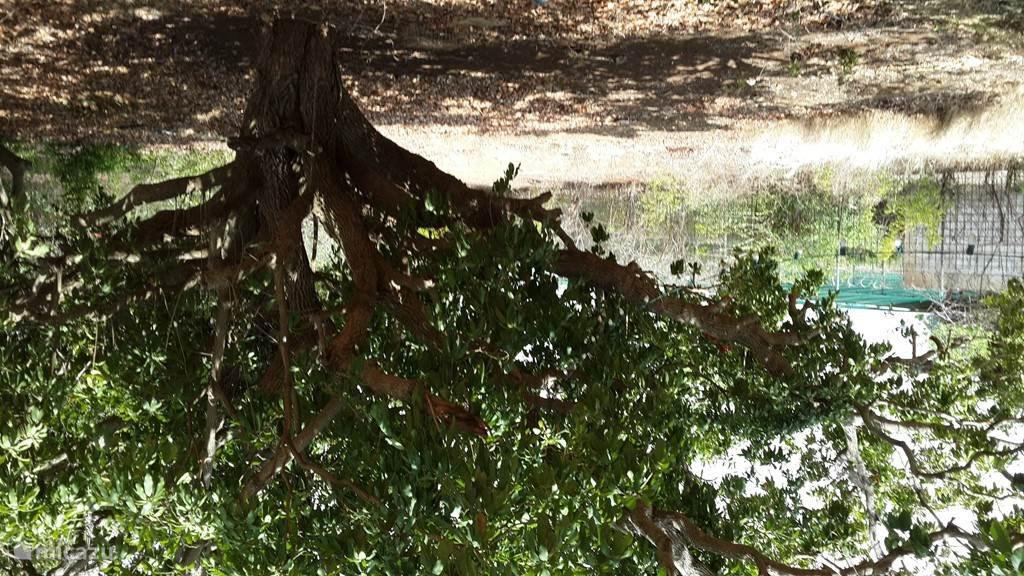 Grote boom naast het appartement