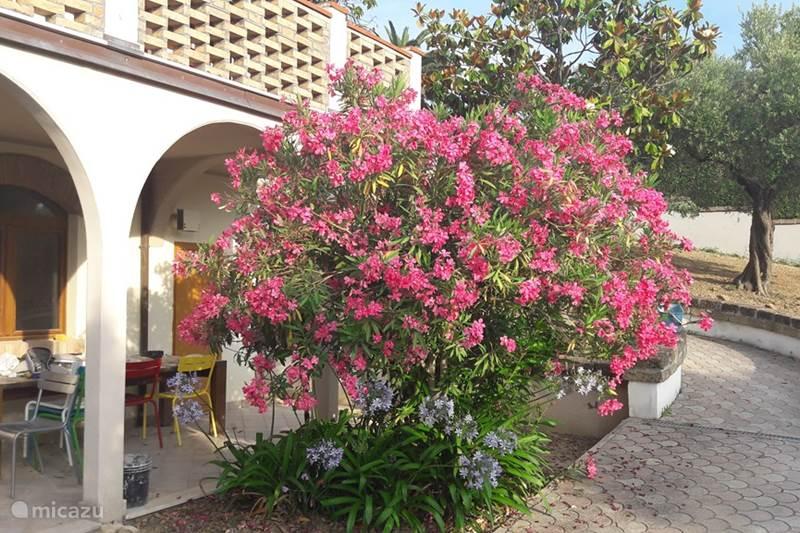 Vakantiehuis Italië, Abruzzen, Pescara Appartement Villa Belpaese - Appartement Colline