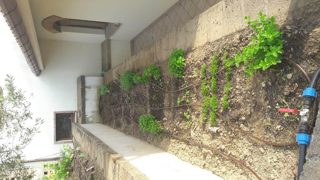 De biologische kruidentuin, waar gasten gebruik mogen maken van pepermunt, citroenmelisse, kamille, basilicum, tijm, oregano, salie etcetera...