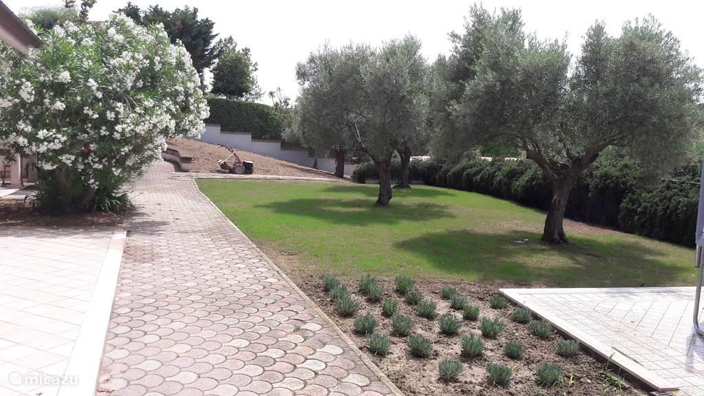 Het net ingezaaide grasveld met olijfbomen in de tuin. Inmiddels is het grasveld helemaal volgroeid ;-)