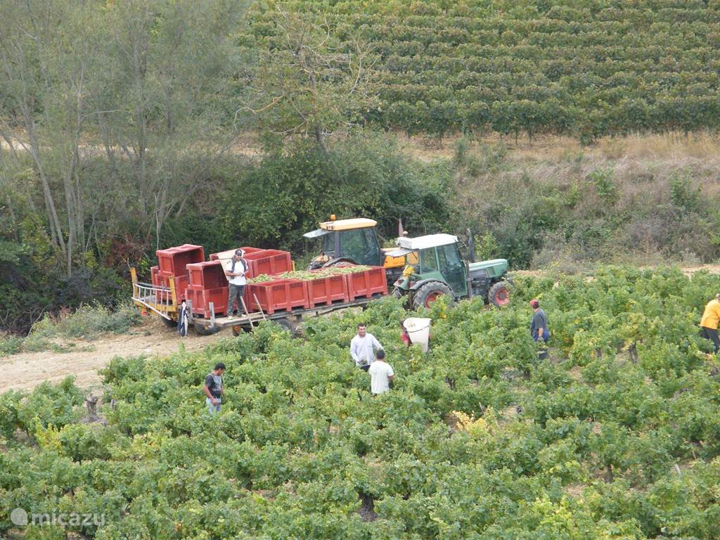 druivenoogst omgeving Caudeval