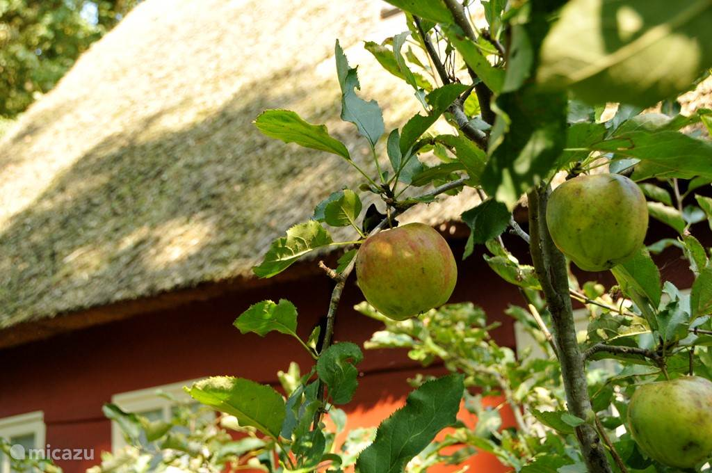 In de herfst kunt u zelf appels plukken en taart bakken. Er is een mixer en oven aanwezig.