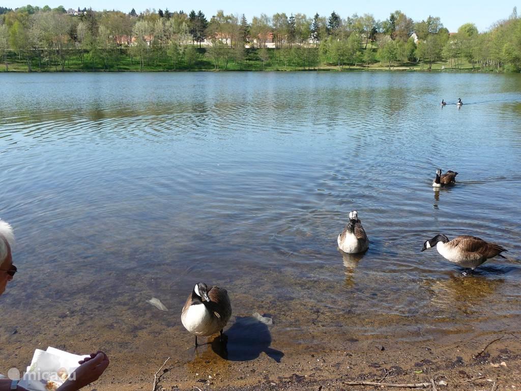 Een van de vele meren in de buurt waar u of de huisdieren kunnen zwemmen