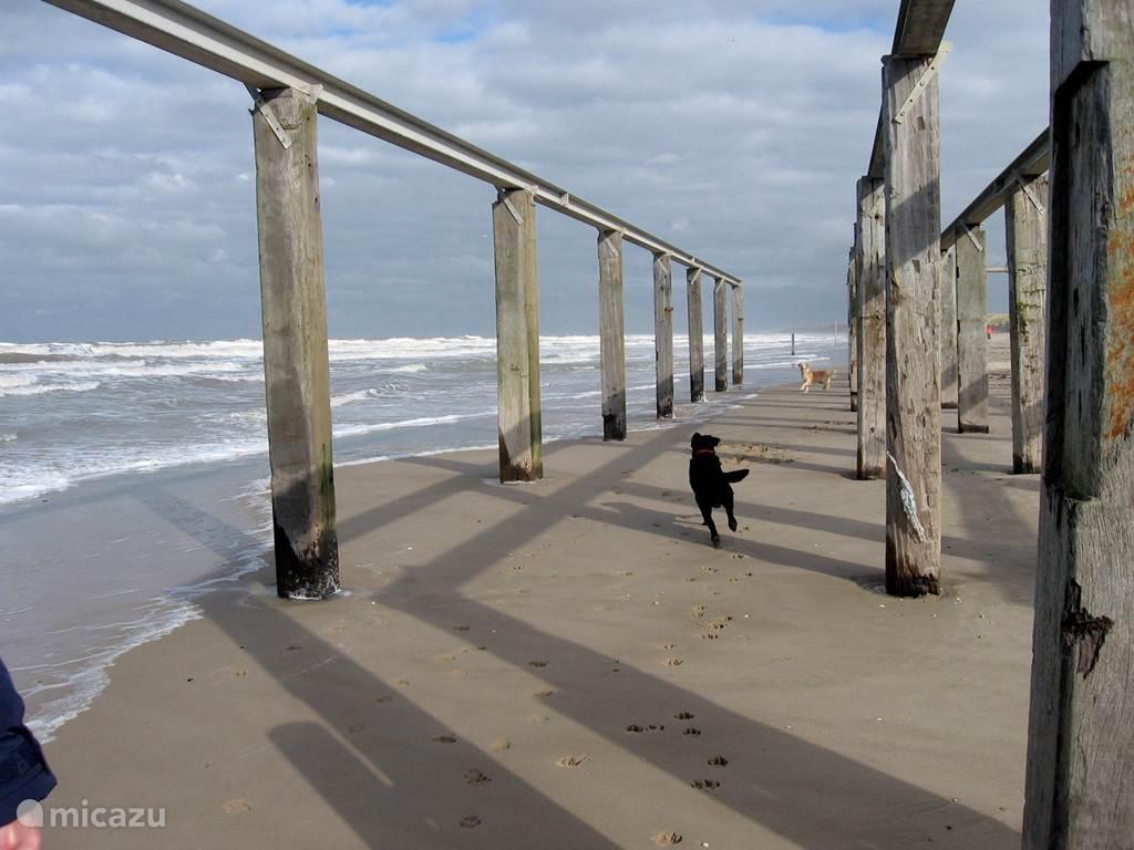Honden toegestaan op het strand.