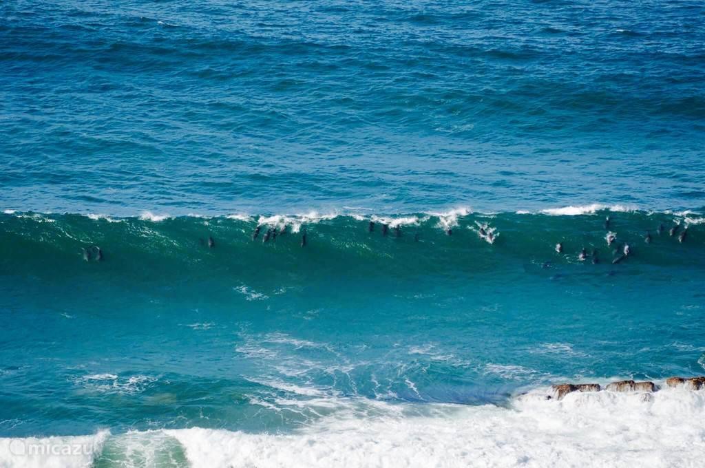 Dolfijnen in de baai voor huis