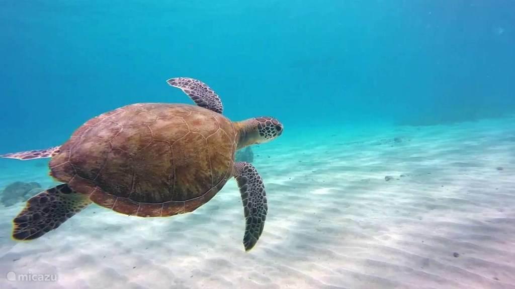 Playa Grandi Turtle Beach