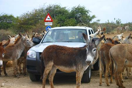 Donkey shelter