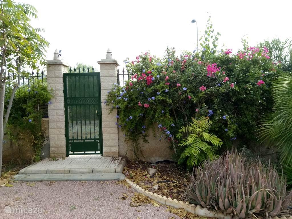 Ons huis heeft vele mooie planten en bloemen