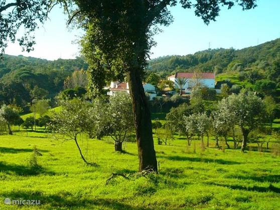 Olival das Hortas, 3 huizen en 2 glamping tipis