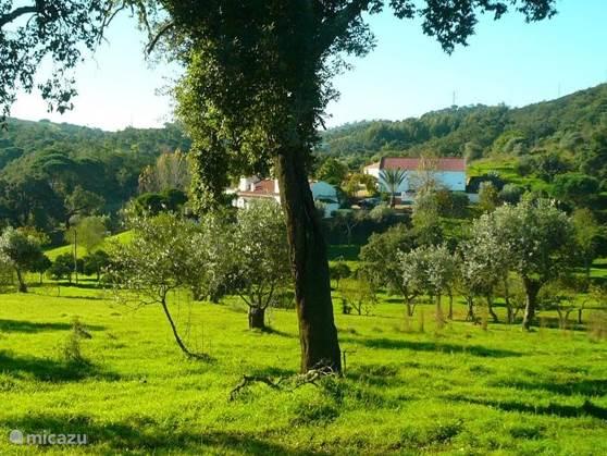 Winter sun, Portugal, Alentejo, Grandola, holiday house Casa da Ruina