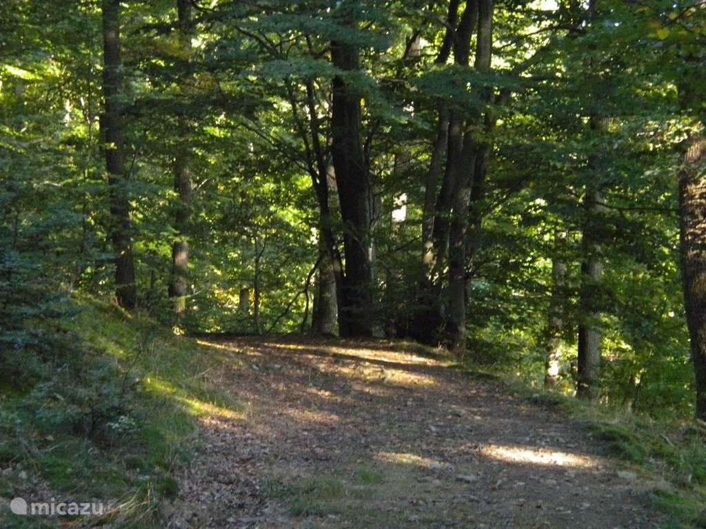 In de bossen tussen Deux-Rys en Heyd, boven het dorp La Forge