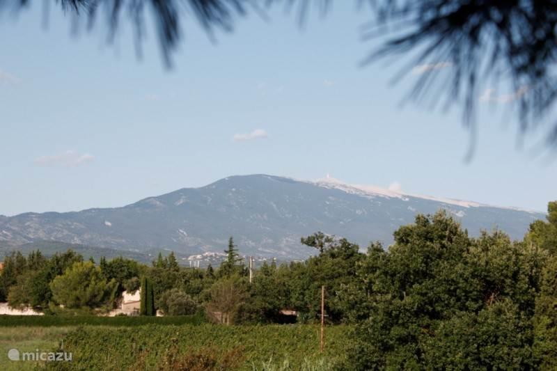 Het uitzicht op de Mont Ventoux vanaf het Domaine
