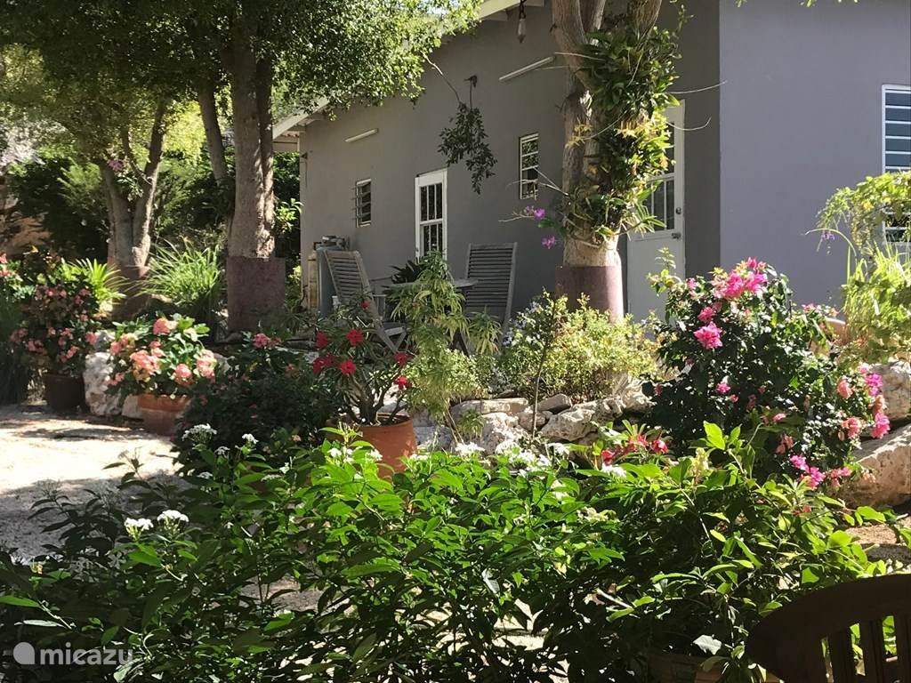 Vacation rental Curaçao, Curacao-Middle, Willemstad - studio Bougainville Studio