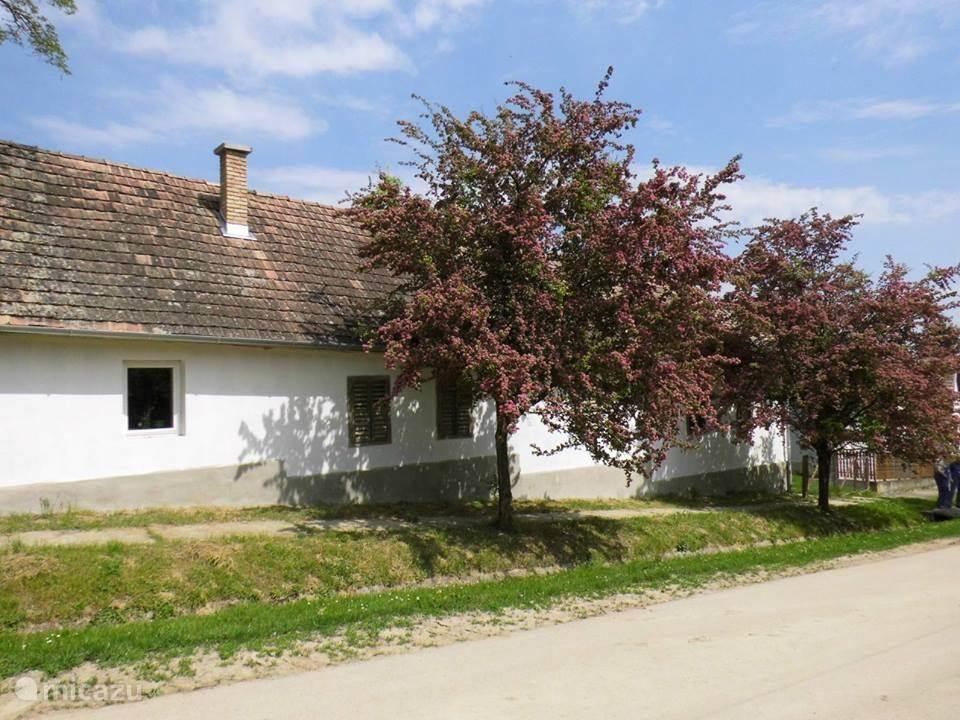 Ons huis in de lente met de bloesem van de meidoorn