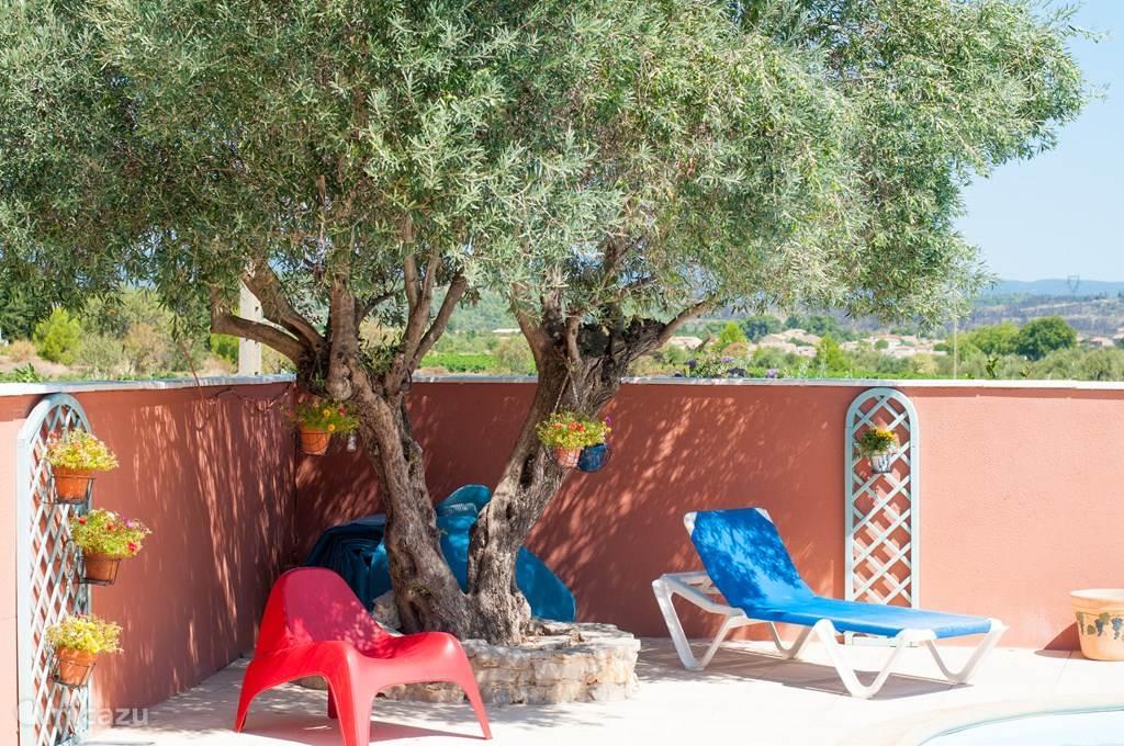Schaduw onder de olijfboom naast het zwembad