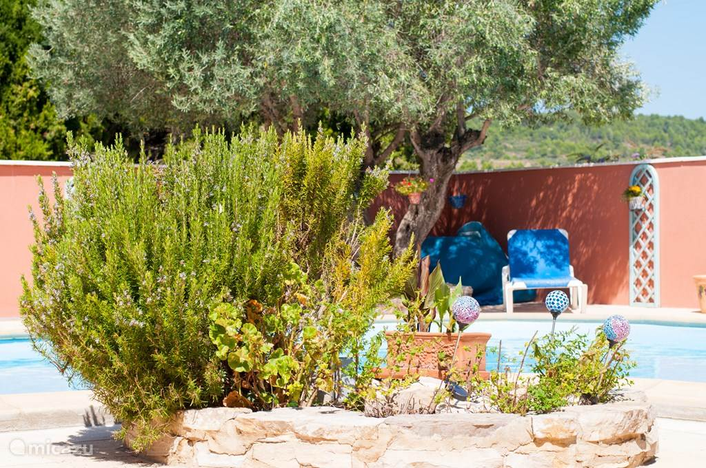 Detailshot van de tuin