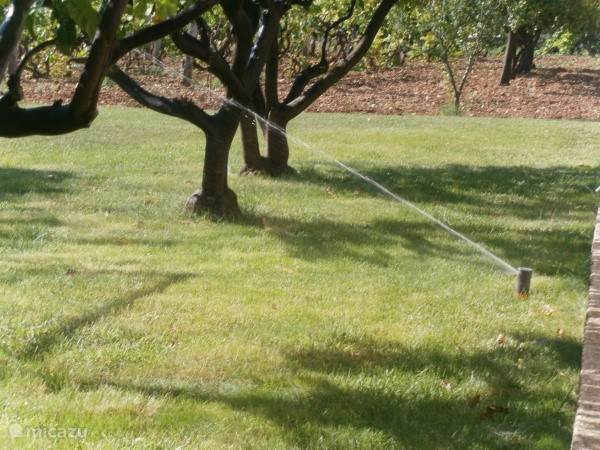 6000m2 garden with olive, tangerine and vineyard
