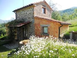 Seccatoio, a free standing house for 2-4 persons under an old chestnut, with a beautiful view on Monte Amiata.