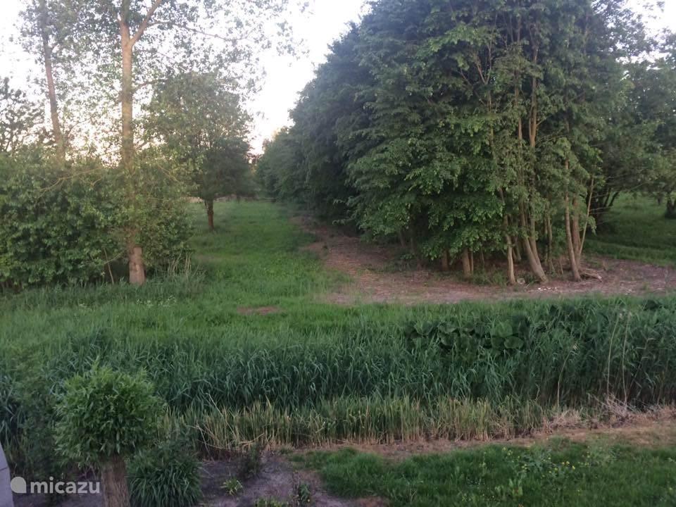 Een prachtig uitzicht vanuit de Villa op het bos.
