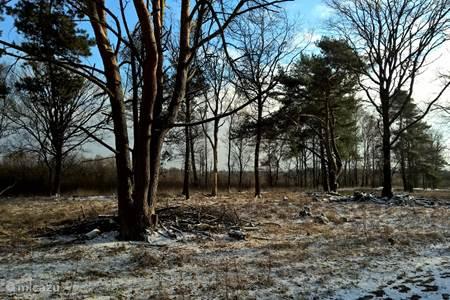 Natuurgebied Korenburgerveen.