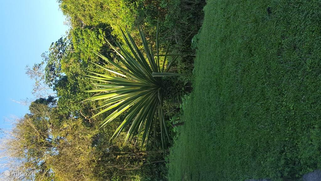 Flora of the garden