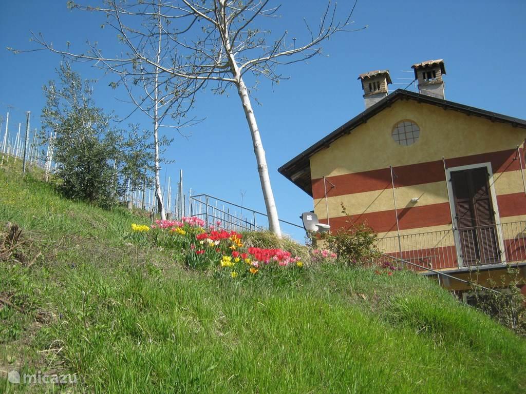 Het schooltje ligt midden in de Barolo wijnvelden. Wij hebben er tulpenbollen geplant die bloeien in april