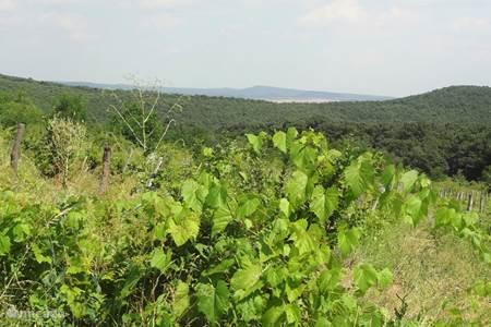 Bukkgebergte achter Eger (wijngebied)