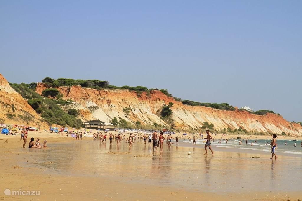 strand Falecia