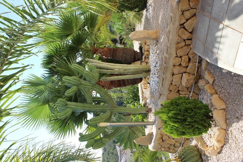 Een klein stukje van onze palmen- en cactussentuin.