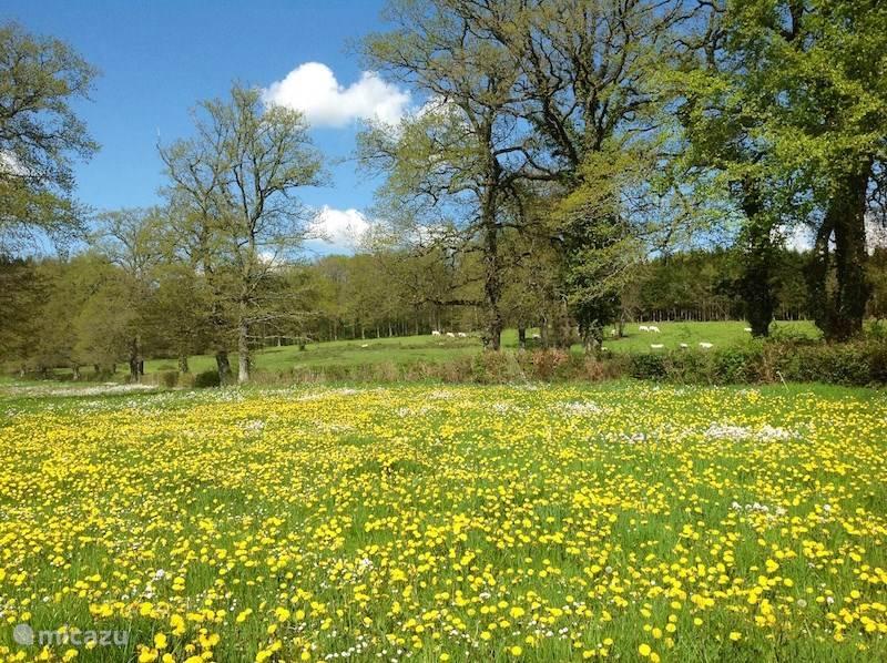 Zo zien hier de weilanden er in het voorjaar uit.