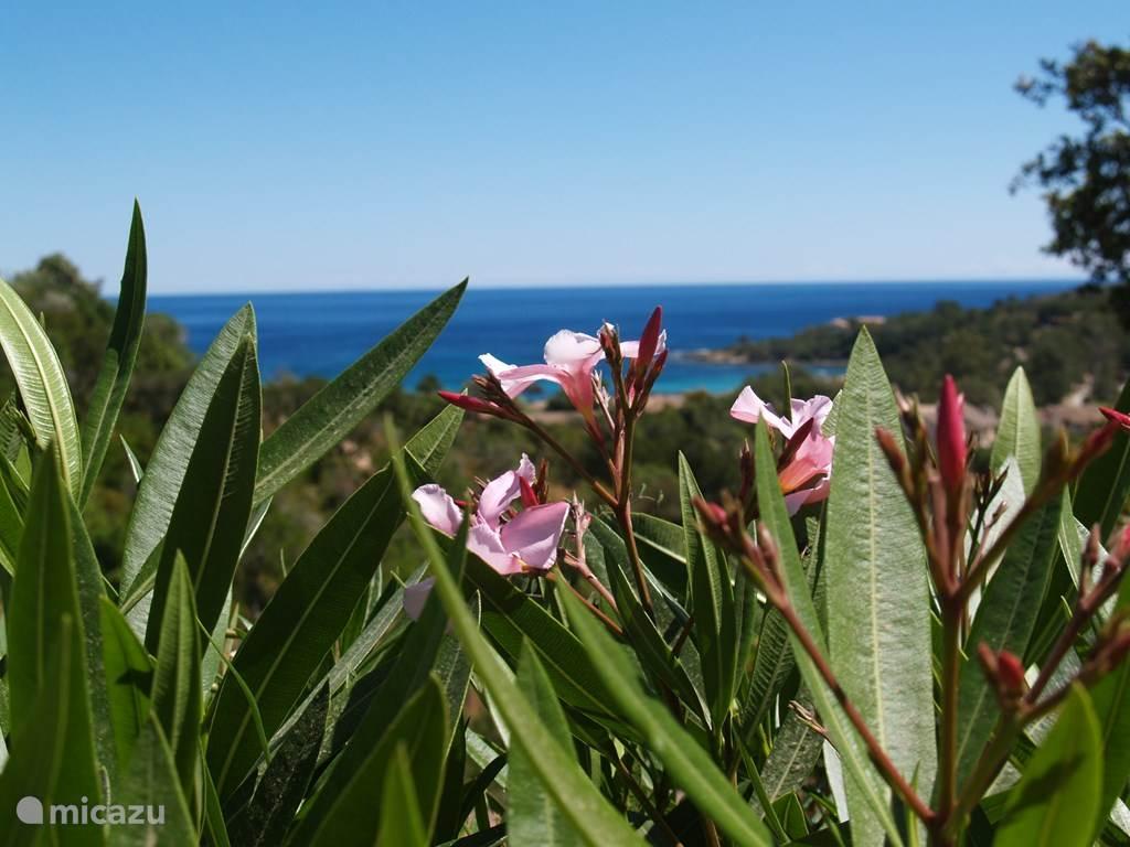 Uitzicht baai Favone