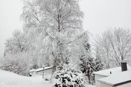 Winterse traveeltjes rondom de bungalo en de directe regio