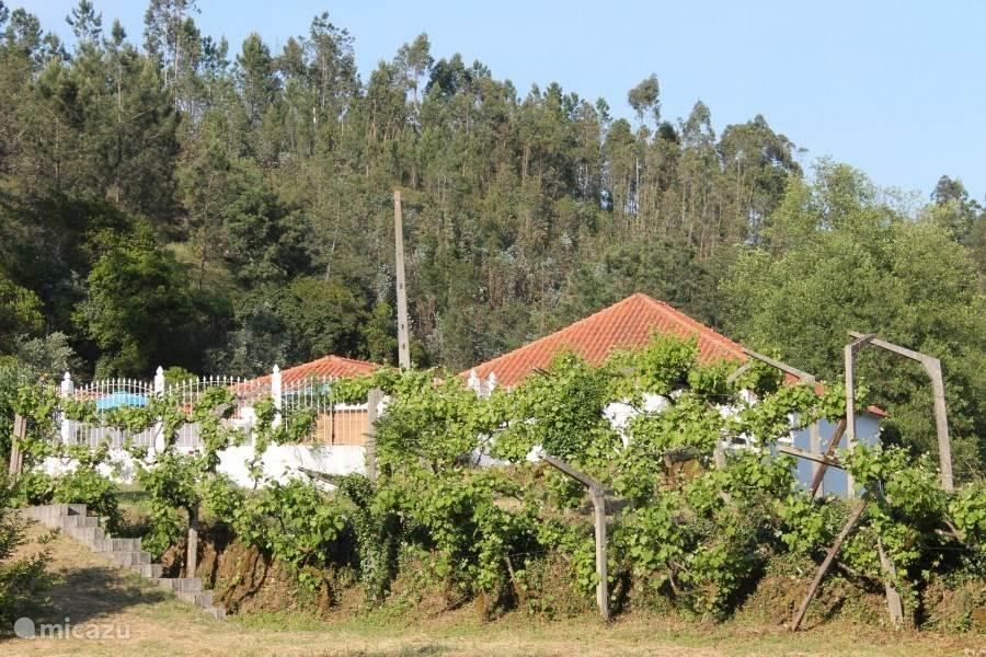 Het wijnveld