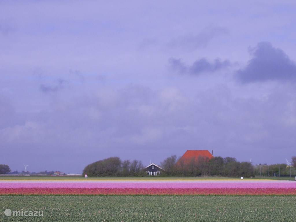 Vakantiehuis Nederland, Noord-Holland – gîte / cottage Walvis