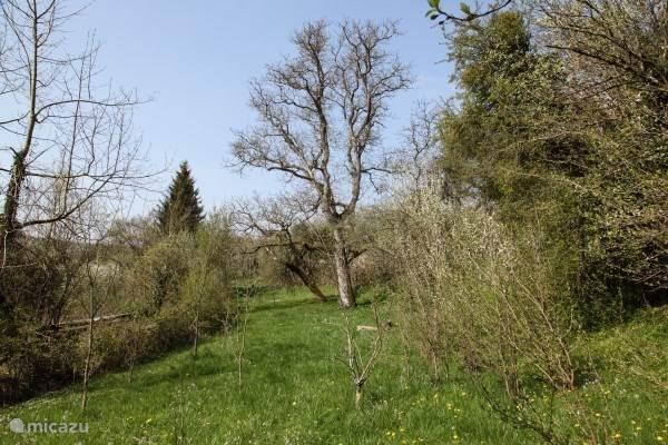Bij het huis hoort een boomgaard waar je ongestoord kunt verblijven. Er staan kersen-, appel-, peren- en pruimenbomen en een eeuwenoude notenboom.
