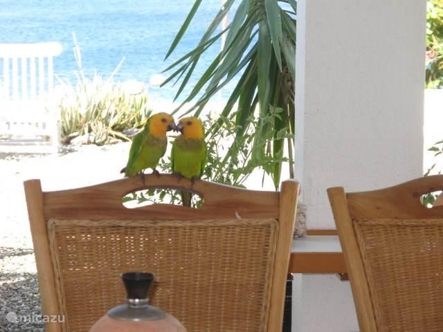 Cuddling parakeets