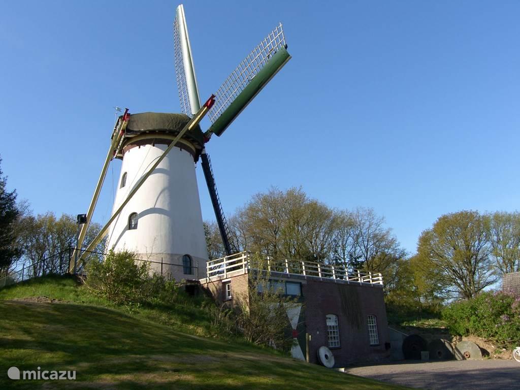Vakantiehuis Nederland, Limburg, Afferden molen Korenmolen Nooitgedacht