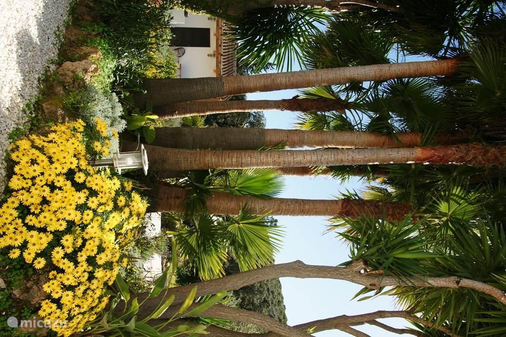 Casa Luna, omringd door palmbomen, yuka's en avocado bomen.