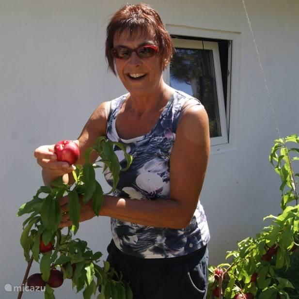 Wilma van Hoeven