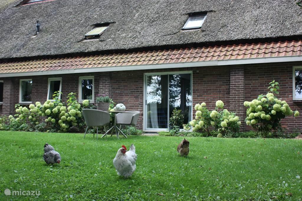 Vakantiehuis Nederland, Drenthe, Meppen vakantiehuis Ake's Hoeve