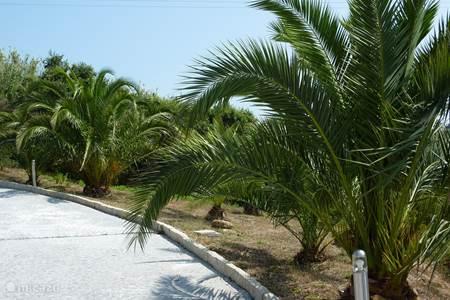 Palmen, tuin