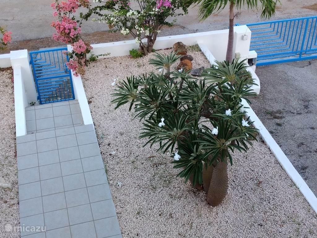 Prachtige voortuin met o.a. de zeldzame Mexicaanse woestijnroos....