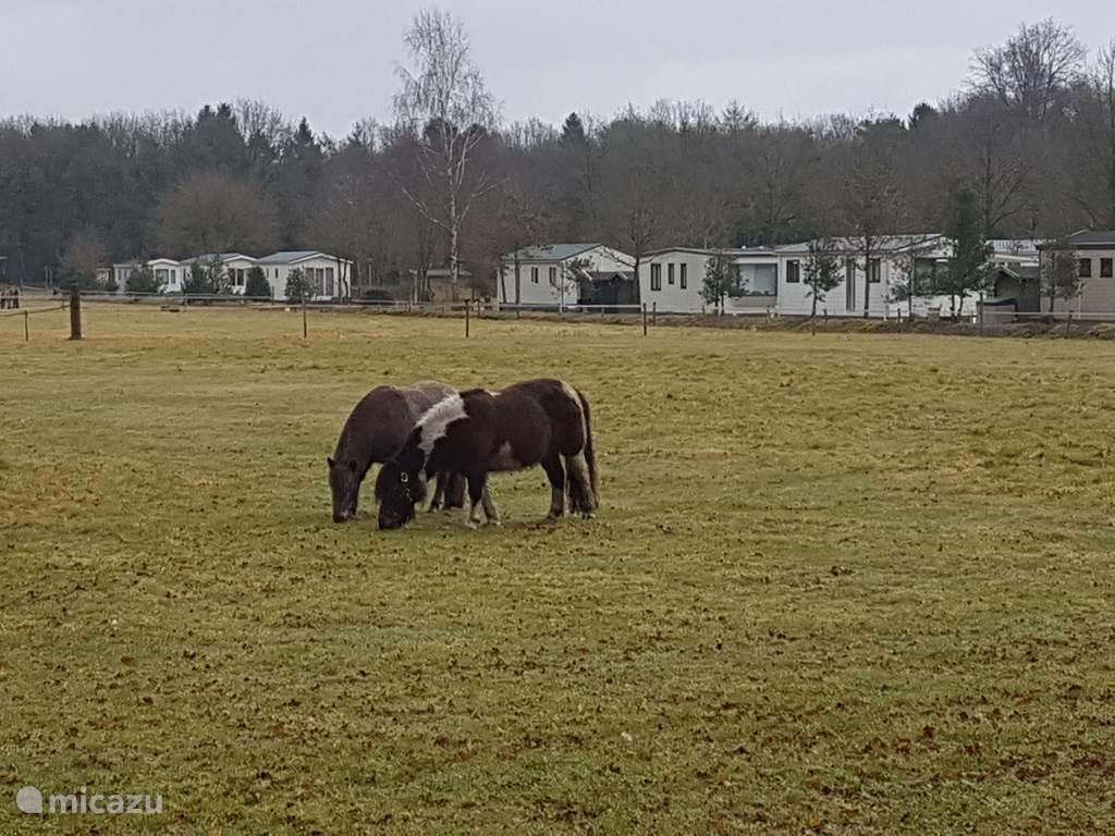 je eigen paard/pony is ook welkom!