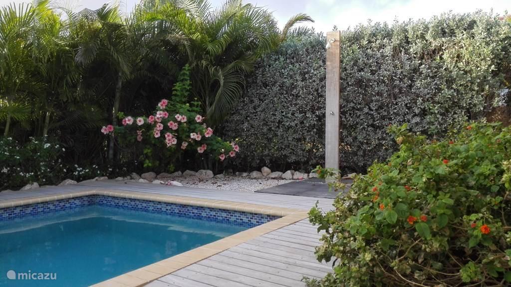 Tropische tuin rondom de pool.