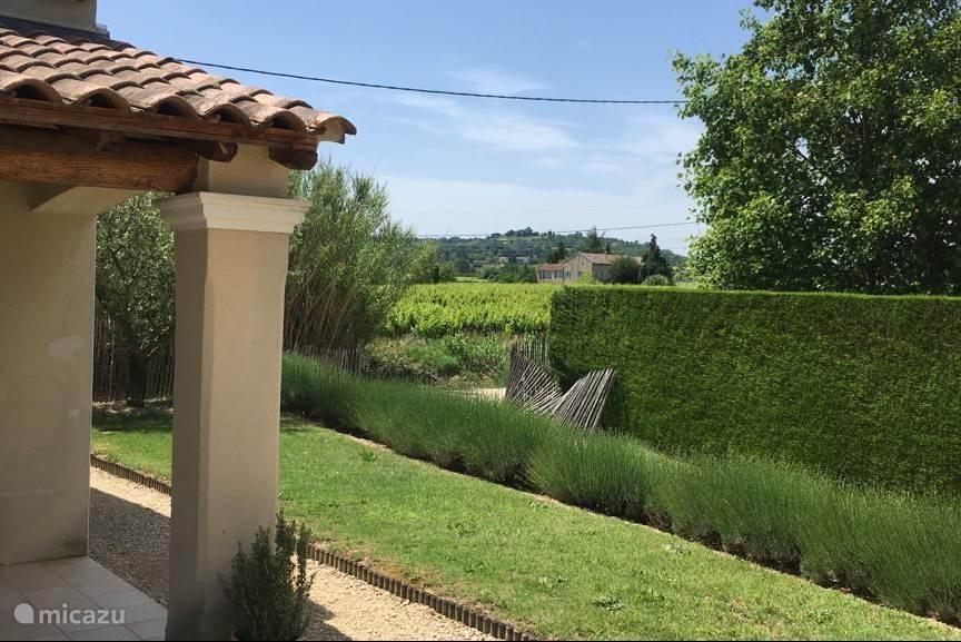 Uitzicht vanaf het terras over de wijngaarden