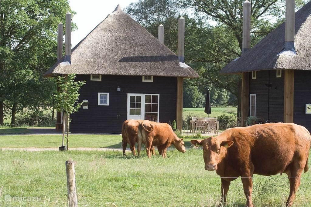 Vakantiehuis Nederland, Overijssel, Wierden Boerderij Hooiberg Slig 1