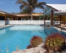 Vier gezellige appartementen met een groot zwembad in de veilige villawijk Grote Berg. Mooie tropische tuin met ligbedden, loungeset en BBQ. Dicht bij de rustige stranden en ruige natuur van de Westpunt. Eigenaren helpen u graag om uw droomvakantie te realiseren!