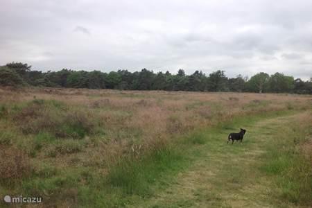 Prachtige heidevelden in het Reijntjesbos