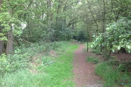 bos in Reijntjesveld
